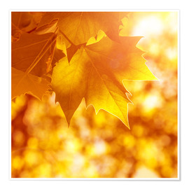 Premium poster orange maple leaves
