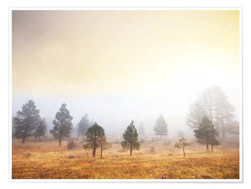 Premium poster Magic forest of misty