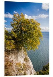 Acrylic print  Chalk cliffs in the Jasmund National Park on Rügen