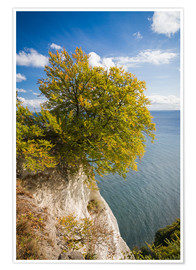 Poster  Chalk cliffs in the Jasmund National Park on Rügen