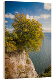 Wood print  Chalk cliffs in the Jasmund National Park on Rügen