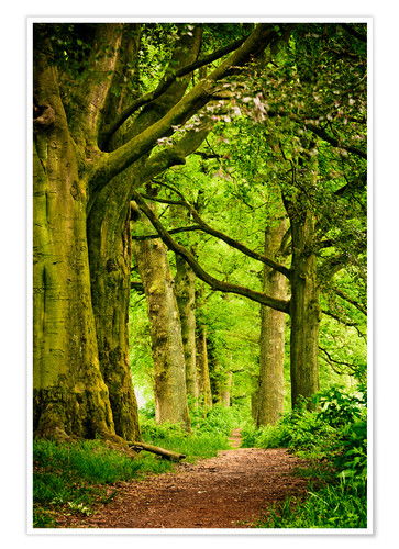 Premium poster Beautiful spring colors in a forest