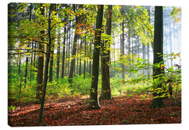 Canvas print  Autumn forest early in the morning sunlight