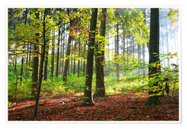 Premium poster  Autumn forest early in the morning sunlight