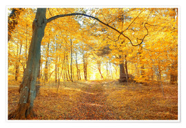 Premium poster  Golden autumn forest