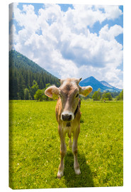 Canvas print  Young Calf - Michael Helmer