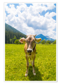 Poster Young Calf