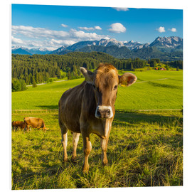 Forex  Funny Cow in the Alps - Michael Helmer