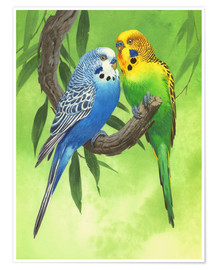Premium poster Budgies on Green Background