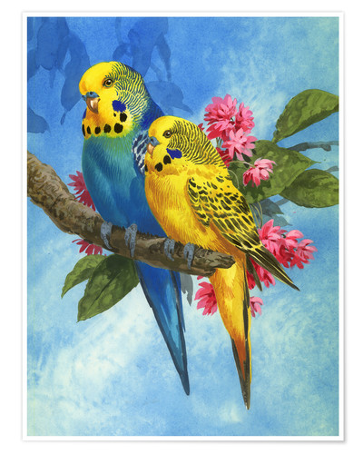 Premium poster Budgies on Blue Background