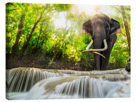 Canvas print  Asian Elephant