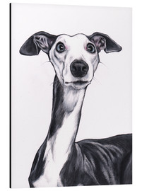 Alu-Dibond  Whippet, Blue and white - Jim Griffiths