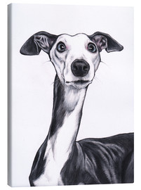 Canvas  Whippet, blue and white - Jim Griffiths