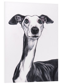 Foam board print  Whippet, blue and white - Jim Griffiths