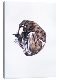Canvas  Whippet at rest, colour pencil portrait - Jim Griffiths