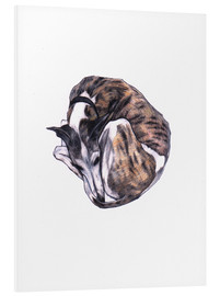 Foam board print  Whippet at rest, colour pencil portrait - Jim Griffiths