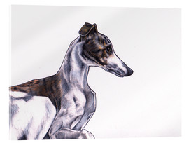 Acrylic print  Whippet illustration, colour pencil drawing - Jim Griffiths