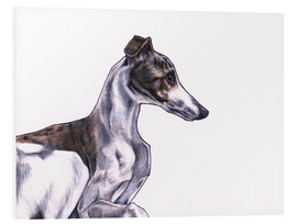 Foam board print  Whippet illustration, colour pencil drawing - Jim Griffiths