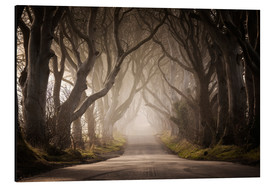 Aluminium print  The Dark Hedges - Carsten Meyerdierks
