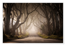 Premium poster The Dark Hedges