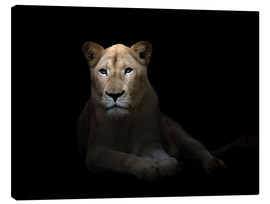 Canvas print  White Lioness in the dark night