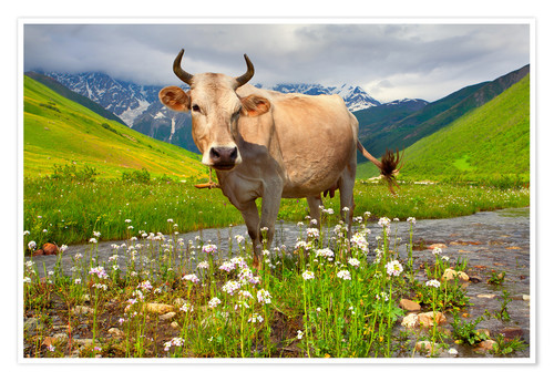 Premium poster Cattle on a mountain pasture