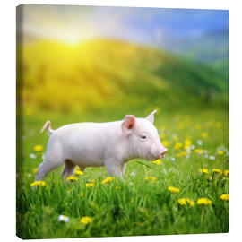 Canvas print  Piggy walk