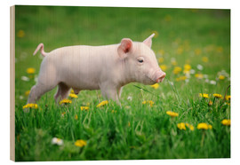 Wood print  Piglets on a spring meadow