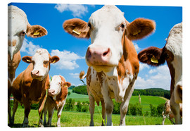 Canvas print  Curious cows