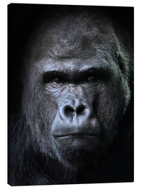 Canvas print  male gorilla in Portrait