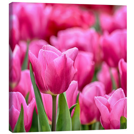 Canvas print  Tulips in pink - Filtergrafia