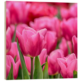 Wood  Tulips in pink - Filtergrafia
