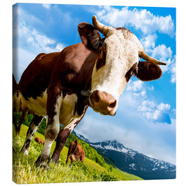 Canvas print  Curious cow