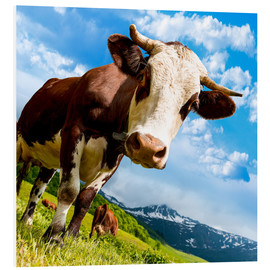 Forex  Curious cow