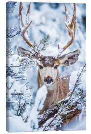 Canvas  Snowy stag