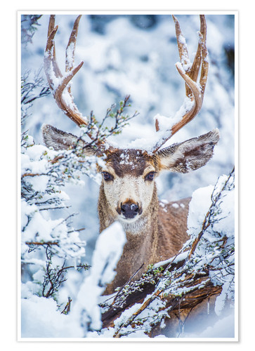 Poster Snowy Stag