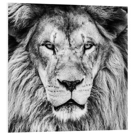 Foam board print  King Lion - black and white