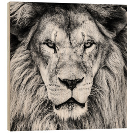 Wood print  King Lion - black and white