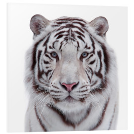 Foam board print  The white tiger