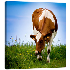 Canvas print  Cow on pasture
