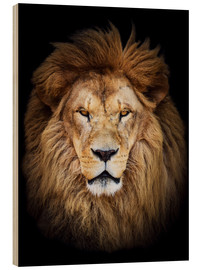 Wood print  King of the Jungle Portrait