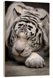 Wood print  Sleeping white tiger