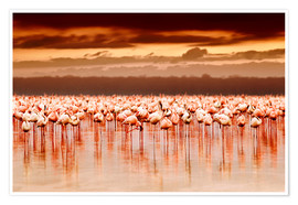 Poster  Flamingos at sunset