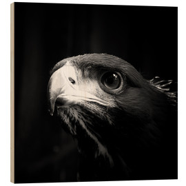 Wood print  view of the young eagle