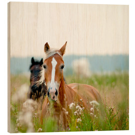 Wood print  Haflinger with wildflowers