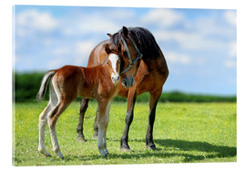 Acrylic print  Mother Love - mare with foal