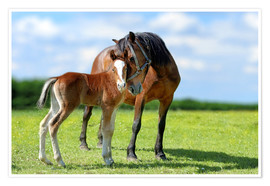 Premium poster Mother Love - mare with foal