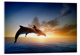 Acrylic print  Dolphins in the sunset