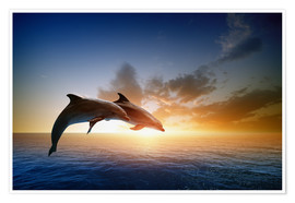 Poster  Dolphins in the sunset