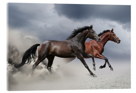 Acrylic print  Horses in the Storm